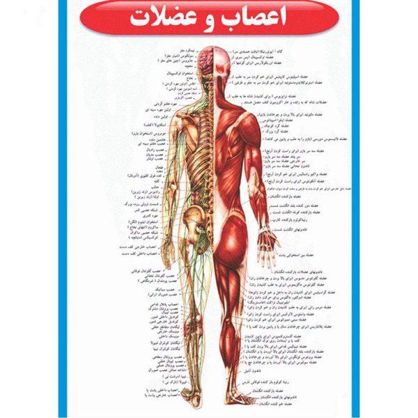 طرح جابر آناتومی بدن