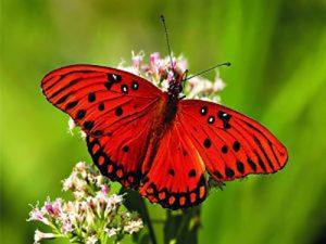 طرح جابر پروانه