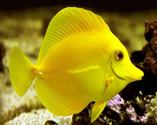 طرح جابر ماهی