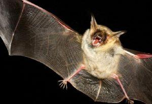 طرح جابر خفاش