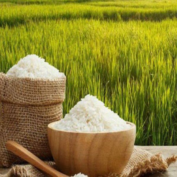 طرح جابر برنج